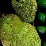 17109 jaca 2 150x150 Jaca: Fruta Rica em Saúde