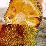 17109 jaca 3 150x150 Jaca: Fruta Rica em Saúde