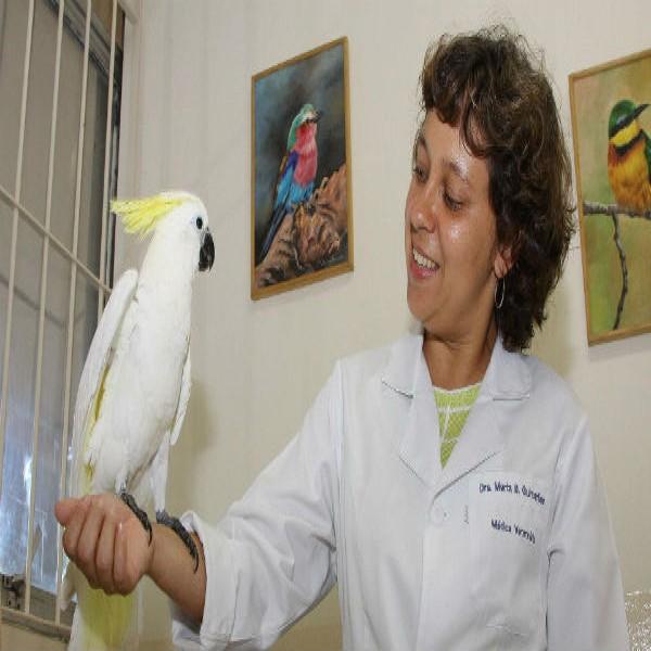 173067 cuidado veterinario aves 600x600 Atendimento Gratuito Veterinario