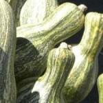 17802 abobora 2 150x150 Abóbora: Benefícios Para o Corpo