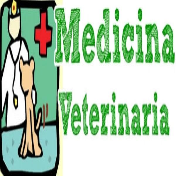 181544 curso de veterinaria 600x600 Faculdade de Veterinária Preços