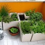 20051205 Horta 150x150 Horta em Apartamento, Como Montar