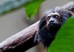 Animais em Extinção em São Paulo SP – Confira a Lista