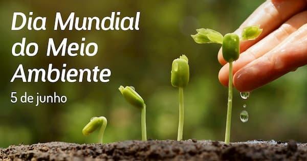 Dia Mundial do Meio Ambiente sementes germinando