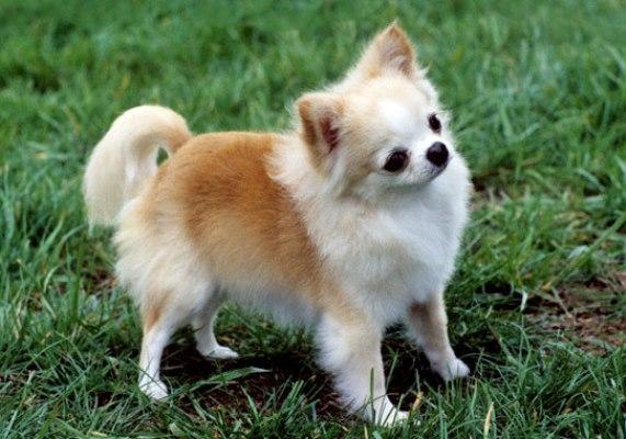 Fotos de cachorro de raça. (Foto: Divulgação)