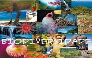 Concurso a Biodiversidade no Brasil 2010
