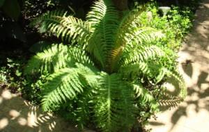 Decoração de Ambientes Com Samambaias Jardins Verticais