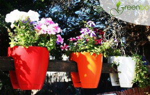 Vasos Para Sacadas de Apartamento – Vaso Greebo Plante