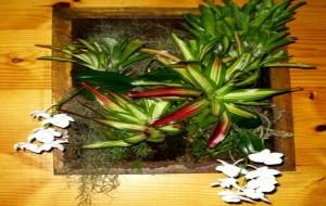 Jardim Vertical Quadro Vivo de Plantas Para Paredes
