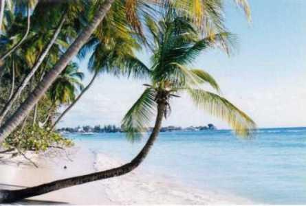 Pacotes Viagens Caribe 2010-2011 CVC