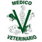 Melhores Cursos de Medicina Veterinária