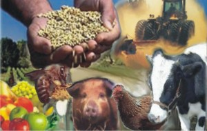 Curso Técnico em Agricultura Grátis ETEC 2013