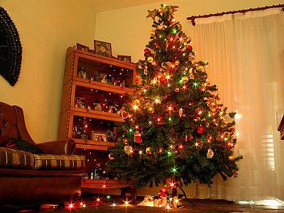 Onde Comprar Árvore de Natal Montada
