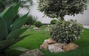 Como Plantar Grama Esmeralda Dicas