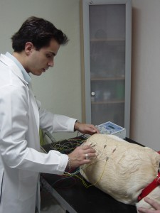 Curso de Acupuntura Veterinária
