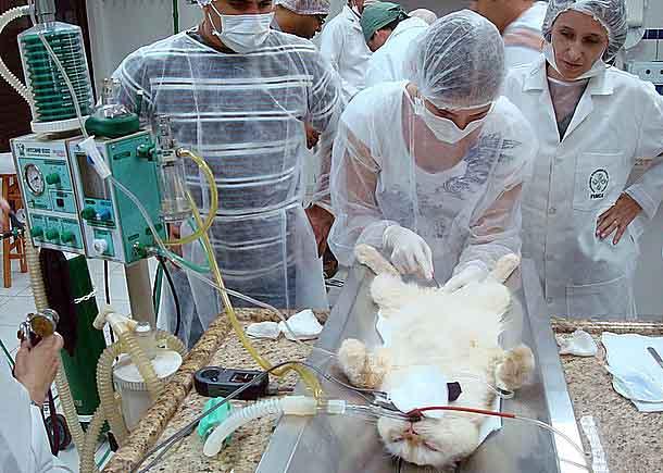 Curso de Anestesia Veterinária