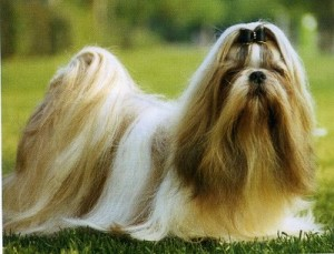 Tratamento Gratuito para Cães