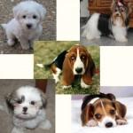 raça-de-cachorro1