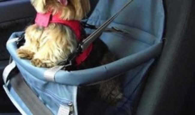 Assento de Cães e Gatos para Automóvel