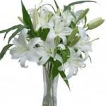 Flores para Homens Sugestões (2)