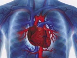 Como Evitar Doenças Cardiovasculares