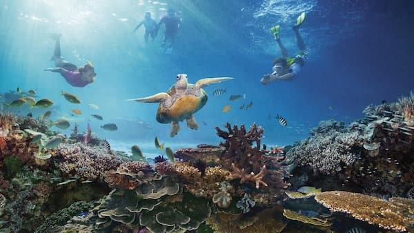 Fotos de Pontos Turísticos no Mundo mergulho nos corais