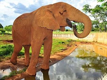 Zoológicos para Visitar no Brasil