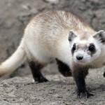 Pets diferentes: animais exóticos são escolhidos no lugar de cães e gatos