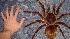 Animais Gigantes: Conheça os Bichos com Tamanho Fora do Normal