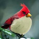 Conheça os Angry Birds da vida real