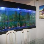 Enorme aquário na residência de Peixe
