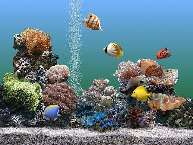 Saiba como montar um aquário em sua casa