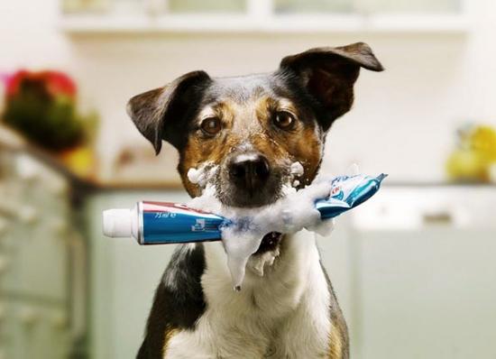 Saiba como manter os dentes dos cães saudáveis