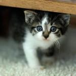 Gatinho escondido debaixo da cama (Foto:Divulgação)