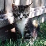 Gatinho lindo encostado na cerca (Foto:Divulgação)