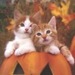 Gatinhos lindos dentro da abóbora (Foto:Divulgação)