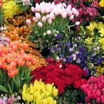 As Flores mais Belas da Natureza (Foto:Divulgação)
