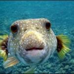Peixe Esquisito (Foto:Divulgação)