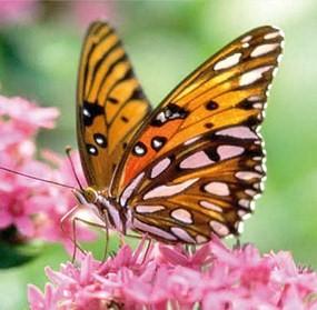 As borboletas mais lindas do mundo