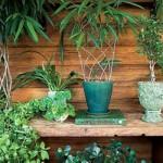 Se preocupe com a luz, umidade e ventilação das plantas.