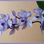 Fotos de Orquideas (Foto:Divulgação)