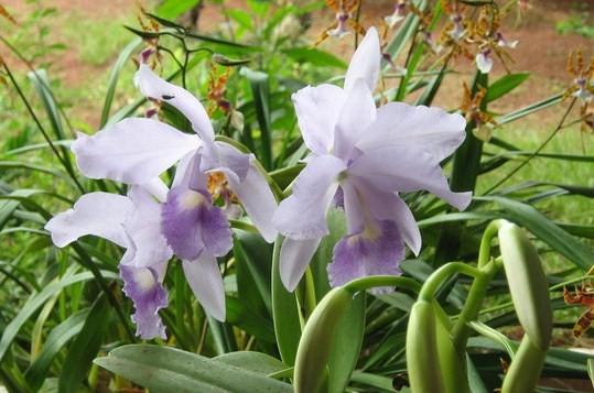 As orquídeas mais bonitas da natureza