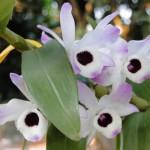 Fotos de Orquídeas (Foto:Divulgação)