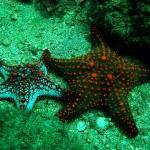 Estrela do mar (Foto:Divulgação)