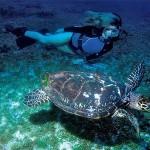 Tartaruga marinha (Foto:Divulgação)