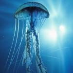 Animais do fundo do mar (Foto:Divulgação)