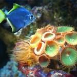 Peixe e Anêmonas do fundo do mar (Foto:Divulgação)
