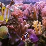 Recife de corais (Foto:Divulgação)