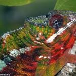 As cores fortes e o colorido servem também para a comunicação entre a especie, além de se camuflar.