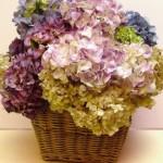Flores secas foram colocadas em um belo cesto de palha.